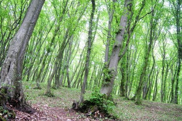 По гриби до лісу в середині травня