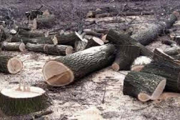 На Тернопільщині підприємство звинувачують у незаконній вирубці лісу