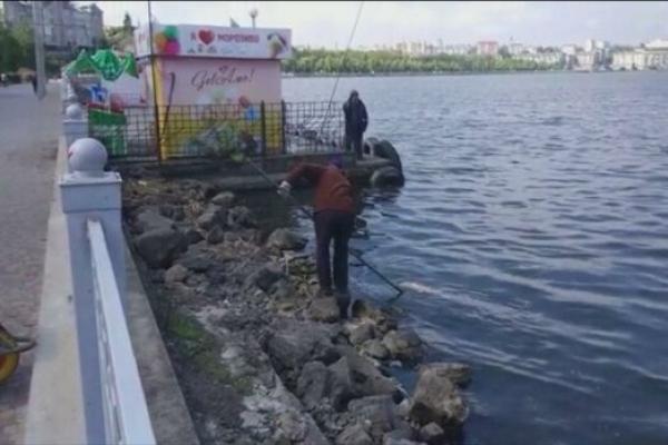 Із Тернопільського ставу виловлюють велику дохлу рибу