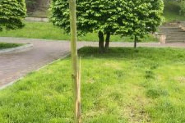 У Тернополі вандали пошкодили дерева на Алеї Героїв