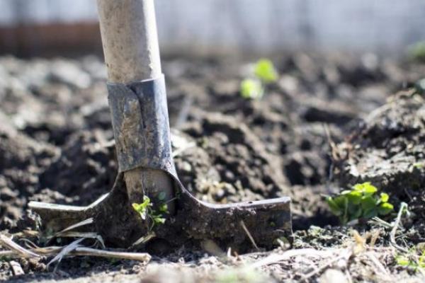 На Тернопільщині роздають землю на холерному цвинтарі