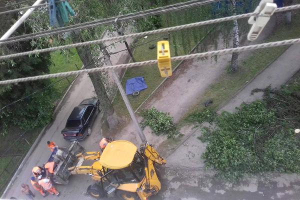 Екопарковка замість дерев: у Тернополі зрубують зелені насадження