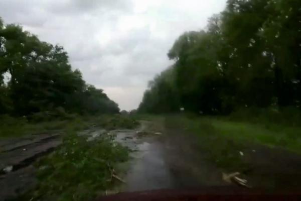 На Тернопільщині вирує негода: вітром повалені дерева, пошкоджені житлові будинки