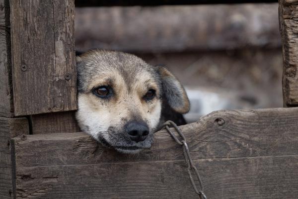 Тюрми для собак