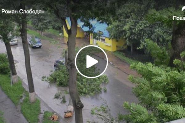 В Теребовлі під час зливи дерево впало на автомобіль (Відео)