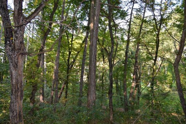 Через службову недбалість на Тернопільщині зрубали ліс на 300 тис. грн