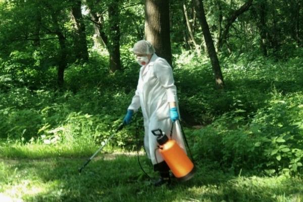 У парках Тернополя знищуватимуть кліщів