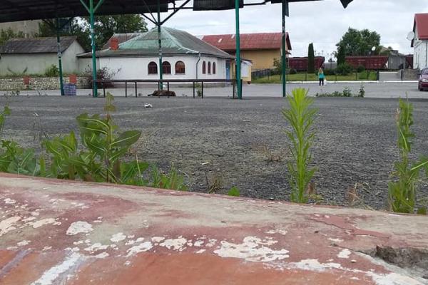 У Ланівцях автостанція заростає бур'янами: люди обурені