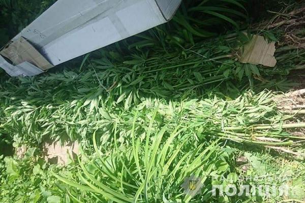 «Вирощував для голубів»: на Тернопільщині у чоловіка вилучили 265 рослин конопель та маку
