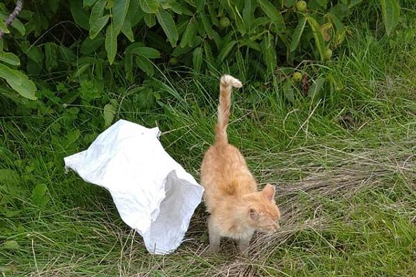 На Тернопільщині невідомі залишили на трасі кота, запханого в мішок (Фото)