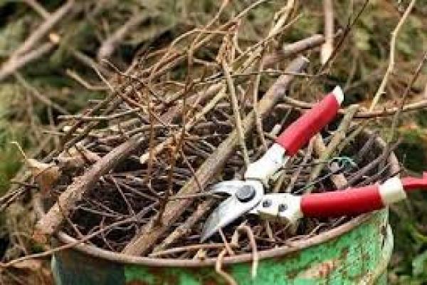 Обрізав дерева: на Тернопільщині помер чоловік