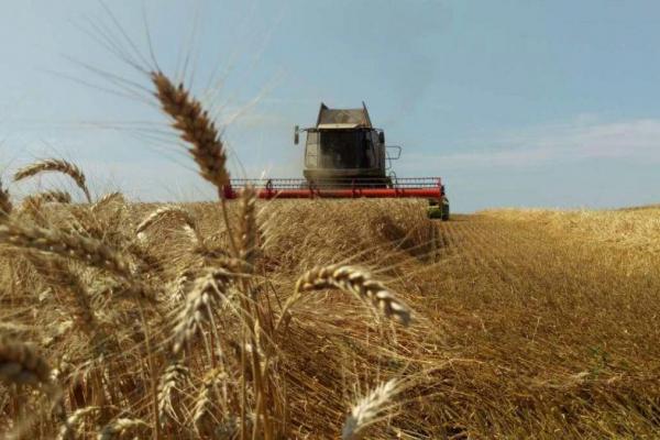 «Карантинні обмеження не помішали зібрати урожай»: на Тернопільщині підбили підсумки жнив