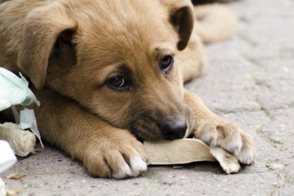 У Бучачі пропонують зібрати гроші для стерилізації безпритульних тварин