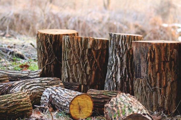 На Тернопільщині підприємство сплатить 840 тис. грн за незаконну вирубку дерев
