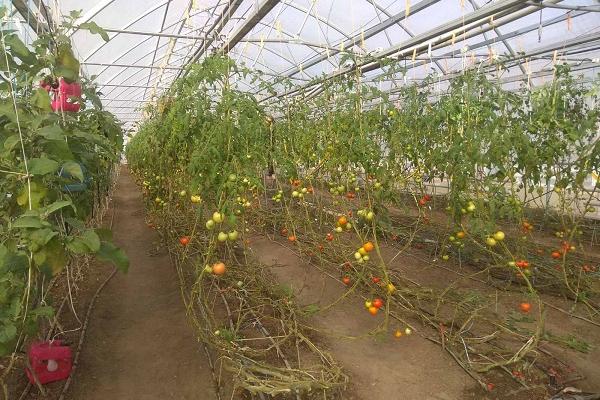 Жителі Шумська набиралися досвіду у сільському господарстві в успішних фермерів та аграріїв Київщини