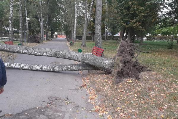 На Тернопільщині сильний вітер наробив лиха (Фото)