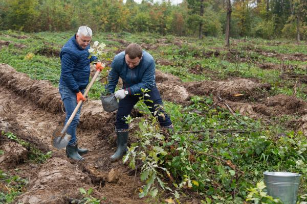 Тернопільщина долучилася до екологічного проєкту «Озеленення України»