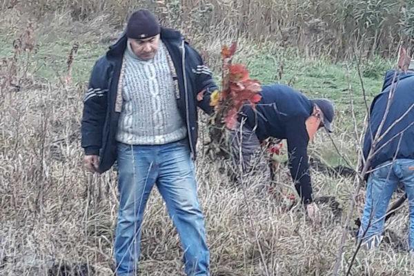Неподалік Козови волонтери висадили близько 2000 дерев - клен червоний, дуб, сосна, ялина