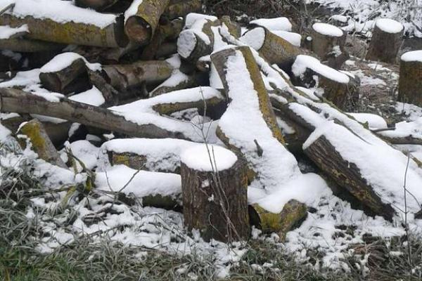 На Тернопільщині виявили черговий «лісоповал»