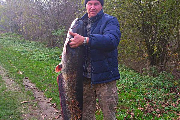 У Ланівцях чоловікспіймав 26-кілограмового сома