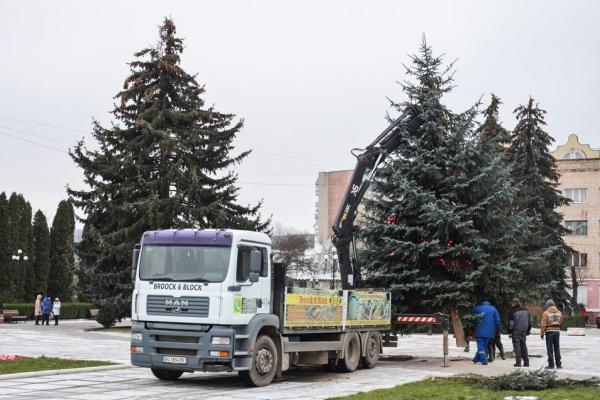 Підготовка до зимових свят: у Чорткові встановили головну ялинку міста