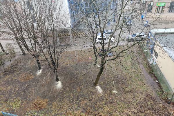 «Намагався зрізати дерева»: у Тернополі розшукують зловмисника