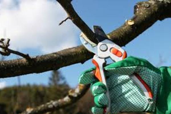На Тернопільщині під час обрізки дерев загинув молодий чоловік