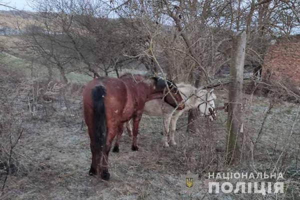 На Тернопільщині юнаки викрали коней та хотіли продати