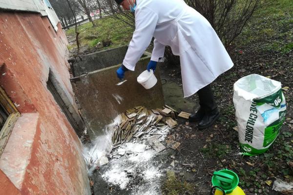 Відловили скажену лисицю: в одному із дворів Тернополя провели дезінфекцію поверхонь