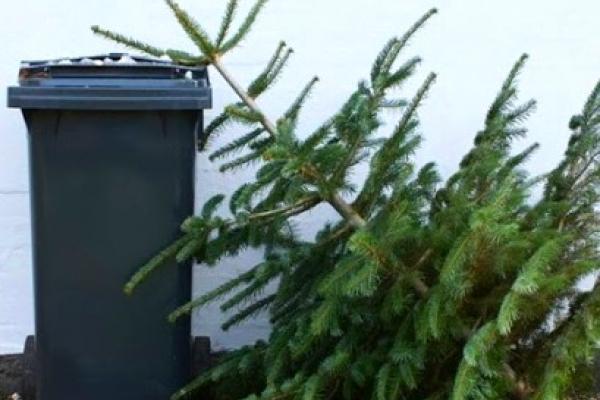 Тернополян закликали залишати використані новорічні ялинки біля сміттєвих контейнерів