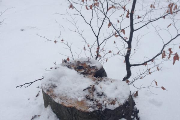 На Тернопільщині знову виявили незаконну вирубку дерев