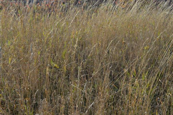 На Тернопільщині агропідприємство незаконно використовувало землю