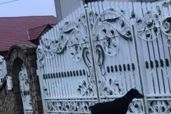 На Тернопільщині собака напала на дітей