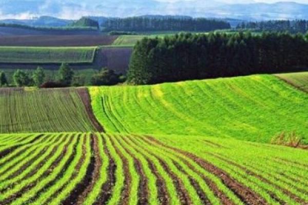 Мінекономіки поінформувало про стан впровадження ринку землі