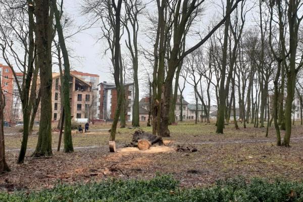 У парках Тернополя обрізають дерева