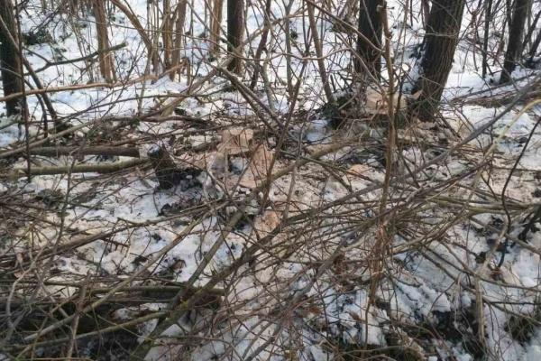 Впіймали на «гарячому»: на Тернопільщині незаконно вирубували дерева