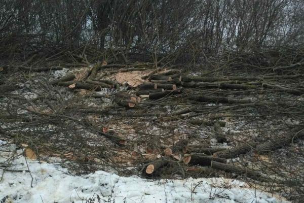 На Тернопільщині незаконно зрізали понад 100 дерев