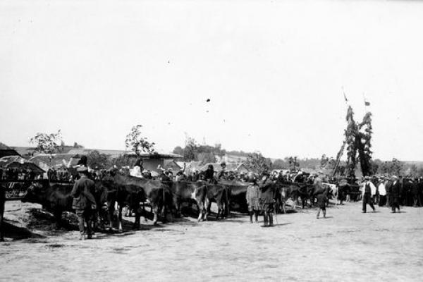 Виставка племінних тварин у Вишнівці на столітніх фото