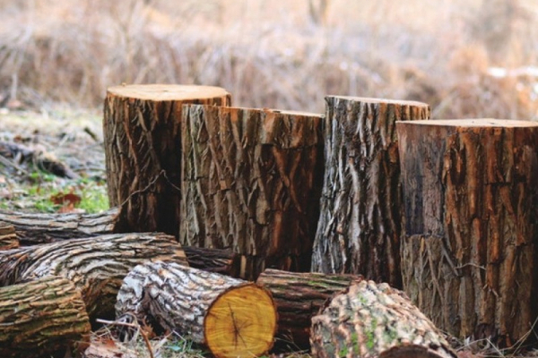 Мешканця Тернопільщини звинувачують у незаконній вирубці лісу