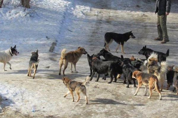 Собаки масово розгулюють у Петриках на Тернопільщині, де 4 роки тому знайшли обкусане тіло жінки