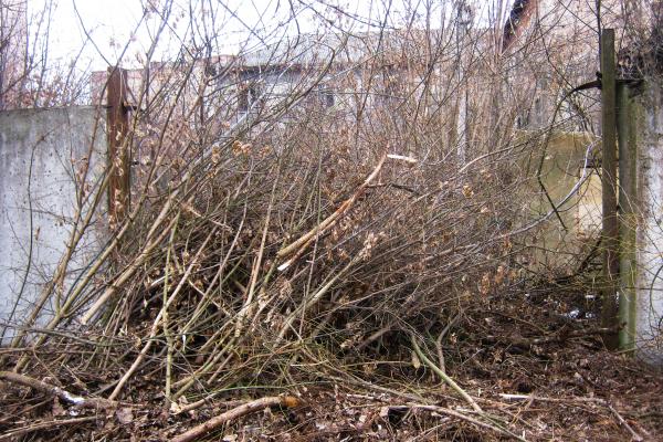 Другий етап чистки частини лівого берега р. Гнізна в Теребовлі, що на Тернопіллі