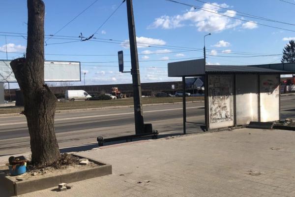 Тернопіль: підприємець пошкодив дерева та намагався незаконно встановити кіоск