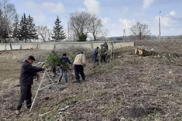 200 сосен висадили у зооботсаду на Лановеччині