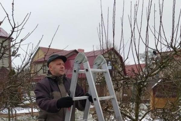 Садівник із Тернопільщини розповів, як робити весняну обрізку дерев