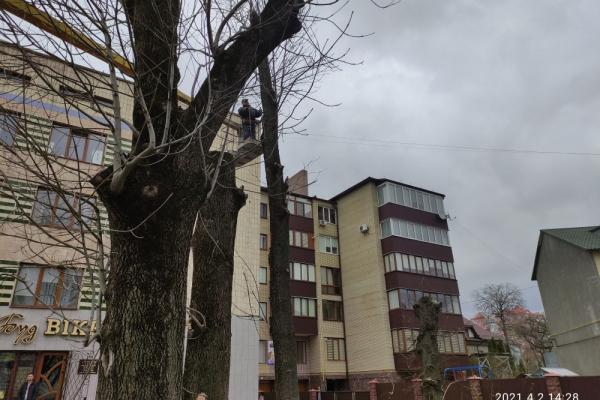 У Тернополі намагалися незаконно зрізати дерева