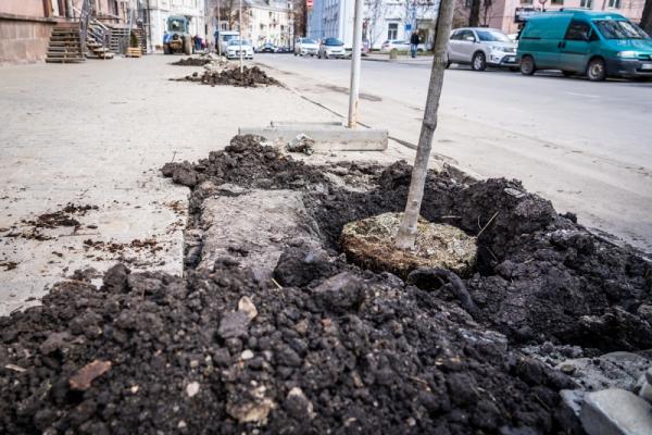 У центрі Тернополя посадили червонолисті клени