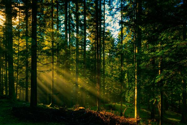 В Україні проведуть інвентаризацію лісів