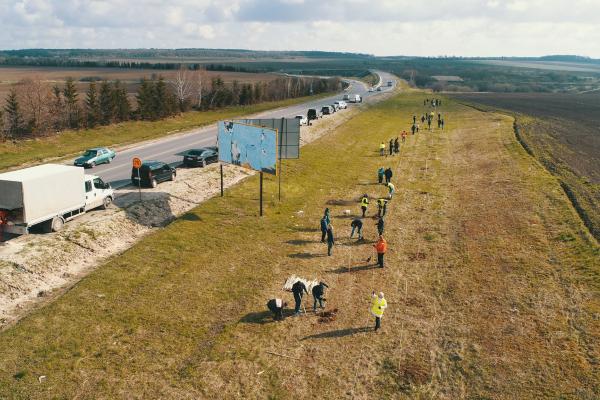 Тернопільщина: вздовж траси М-19 висадили півтисячі дубів