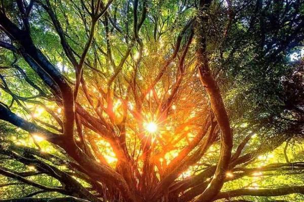 Щоб на світанку Сонцем для світу вставати!