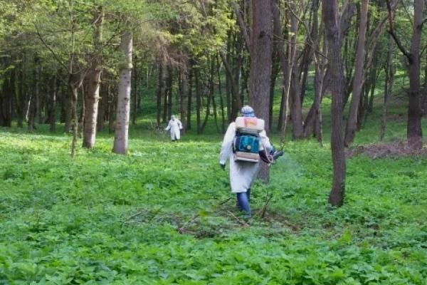 У парках та поблизу дитсадків Тернополя проводитимуть заходи зі знищення іксодових кліщів